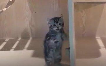 Cute Miut Kucing #7